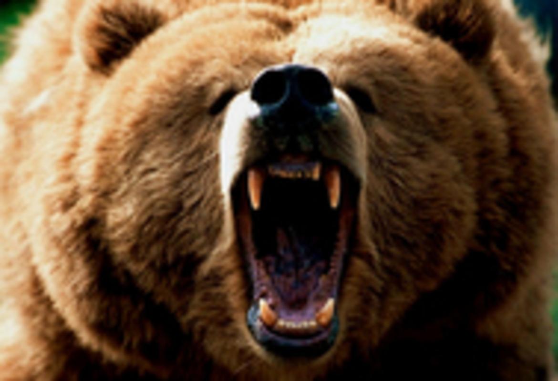 Hero grizzlybear